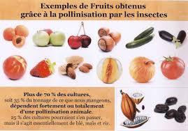 Fruits grace aux insectes