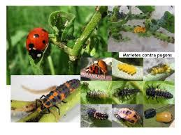 Insectes utils