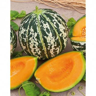 Melon ananas d amerique a chair rouge