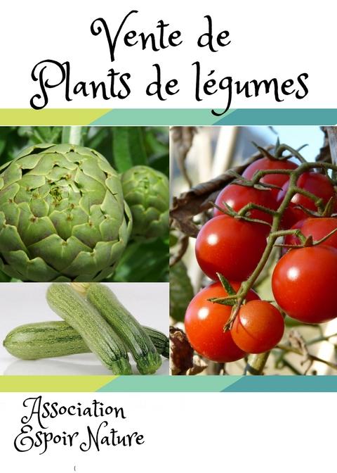 Plants legumes mai 2018