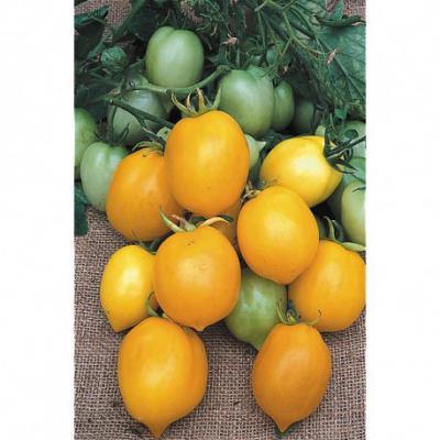 Tomate teton de venus jaune